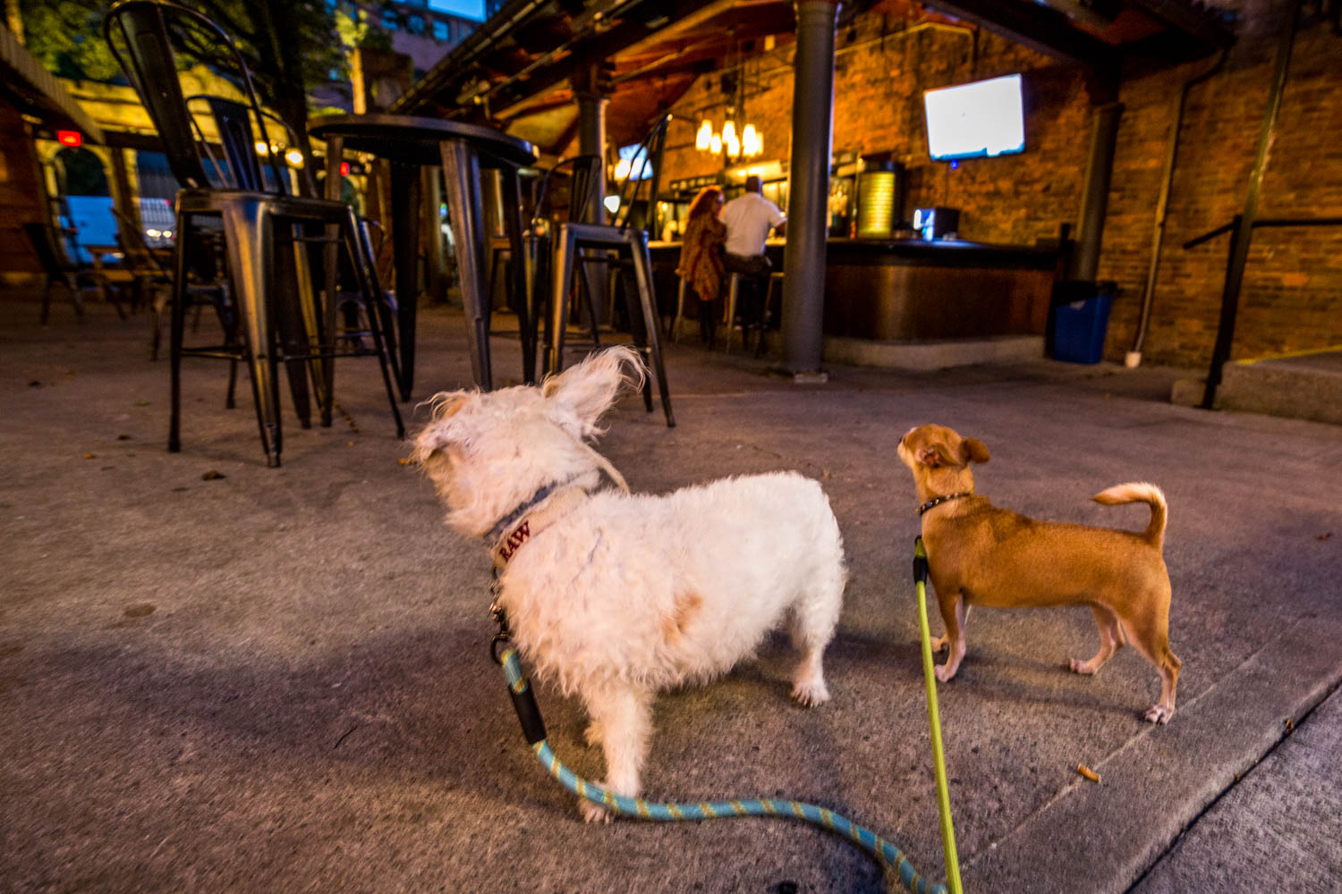 PLACE: Rosedale / ADDRESS: 208 E 12th Street (Over-the-Rhine) / You and your dog will love Rosedale's dog-friendly courtyard. The space has plenty of seating and outdoor games to enjoy with a drink and bite from a circulating lineup of caterers. The interior is dog-friendly, too. / Image: Catherine Viox // Published: 10.14.19