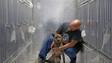 46 dogs, saved from slaughter in South Korea, sent to shelters in NY, MD, PA