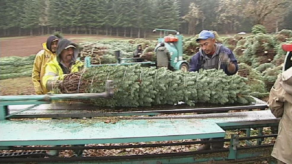 Oregon Christmas Tree Farms