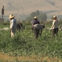 New Bill Proposed, looking to help meet farmers and ranchers need of agricultural workers