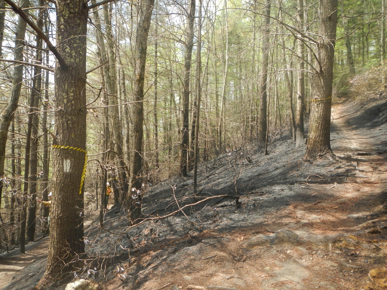 Fire damage on the Appalachian Trail near Hot Springs, N.C. (Photo credit: Appalachian Trail Conservancy)