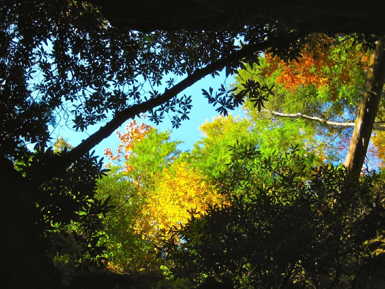 #2 - RED RIVER GORGE, KENTUCKY (Distance from Downtown Cincy: approx. 2.25 hours) / Image: Jen Seiser