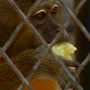 San Antonio Zoo renovating monkey houses