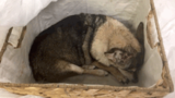 DC Humane Rescue Alliance seeking information on dog left outside facility tied in 2 bags