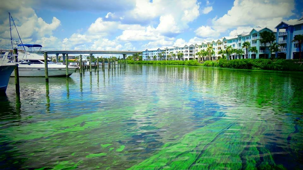 Silver Lake Auto >> $2 Billion for Everglades not a silver bullet for toxic algae | WPEC