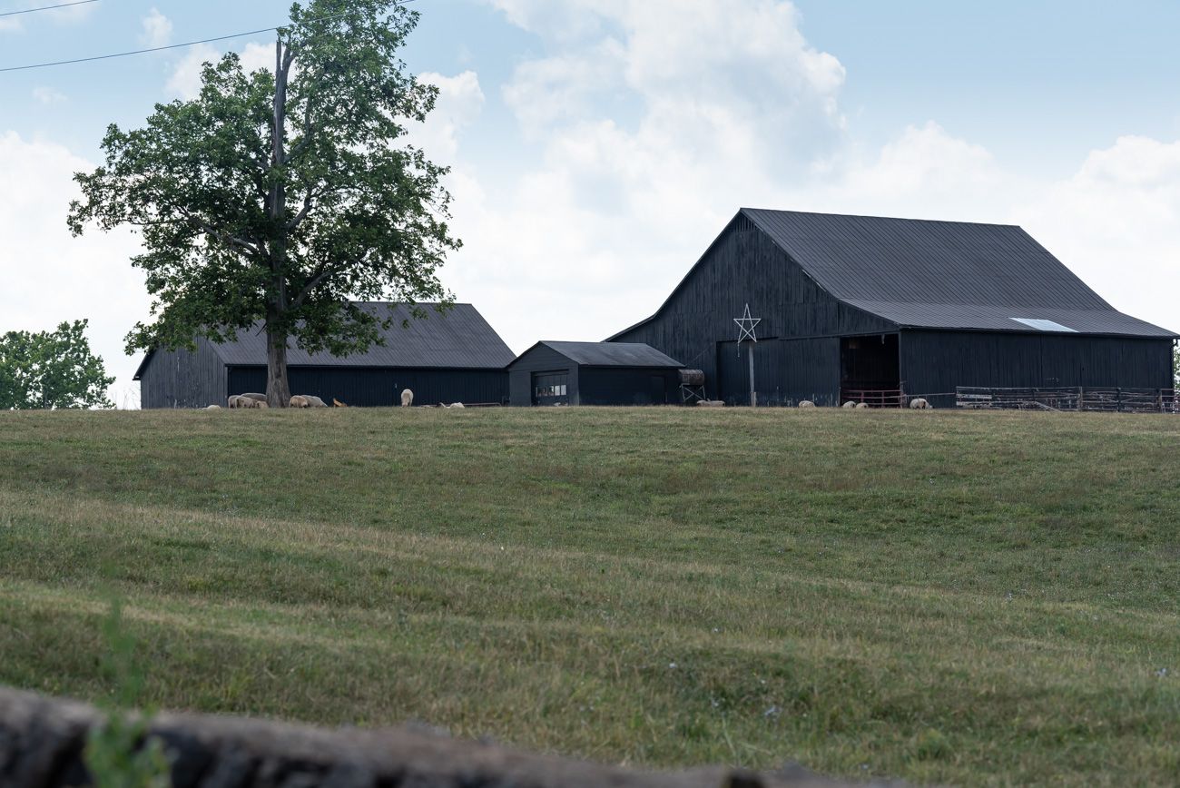 A large black barn with sheep along US-25 in Scott County, KY / Image: Mike Menke // Published: 8.25.20/ Image: Mike Menke // Published: 8.25.20