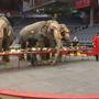 A Dayton original with a new twist: The Antioch Shrine Circus is in town!