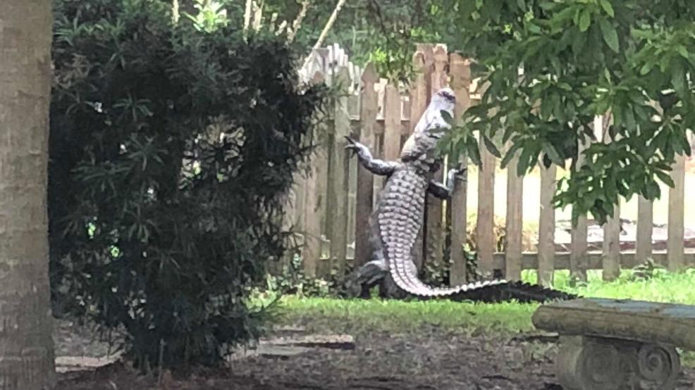 planters on fence with Large Alligator Appears To Scale A Fence In Mt Pleasant Neighborhood on 10 Inspiring Design Ideas For Tiny Backyards in addition Green Living Fence as well Rock Garden Designs Front Yard together with Category pathway 130 besides Edge Your Bed With Low Growing Shrubs.